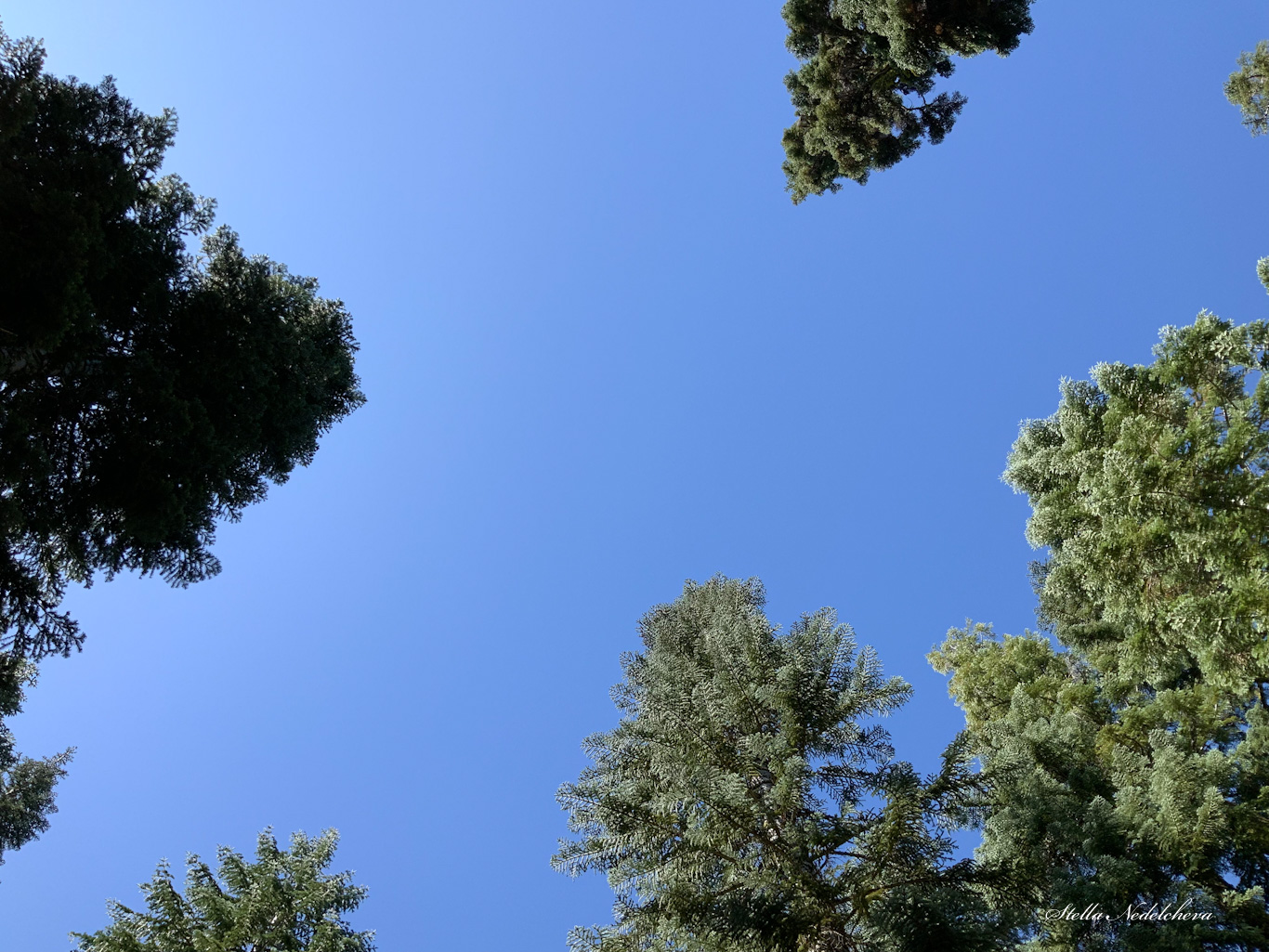 Sommets d'arbres sur le fond d'un ciel bleu