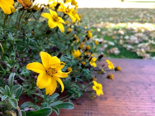 Fleurs jaunes en automne