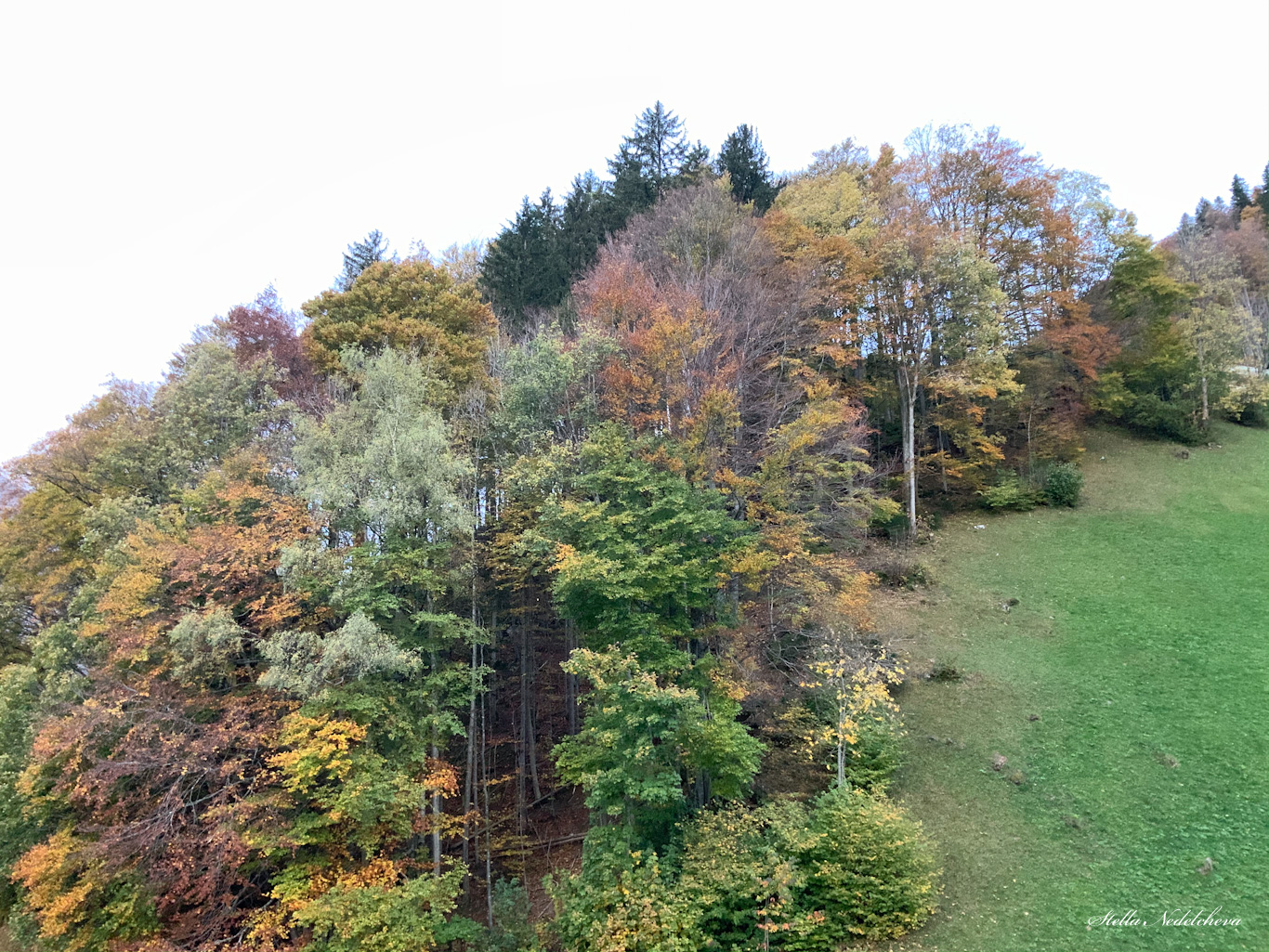 Forêt en automne - dans les Alpes