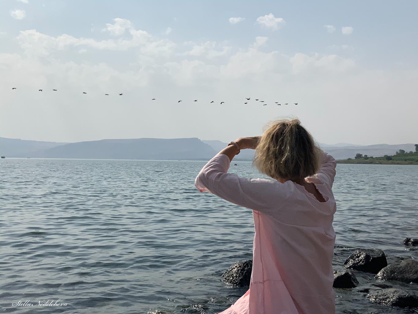 Contemplation d'oiseaux volant au -dessus de la Mer de Galilée