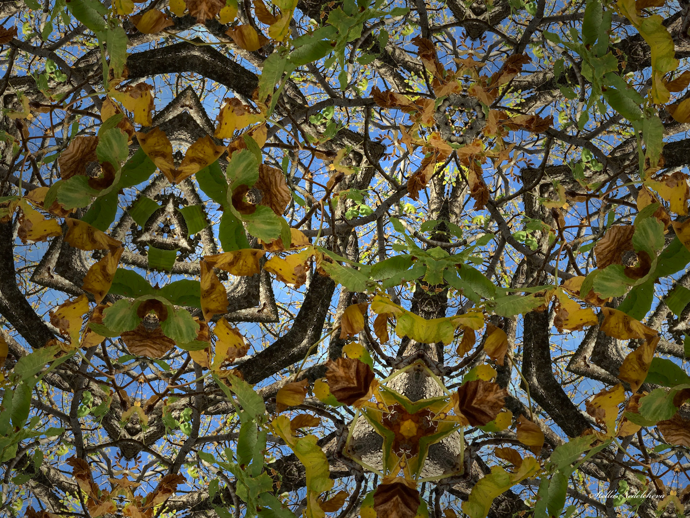 Toile de branches et de feuilles d'automne