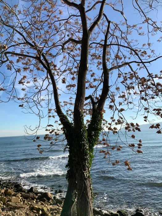 Arbre au bord de la mer Noire en hiver