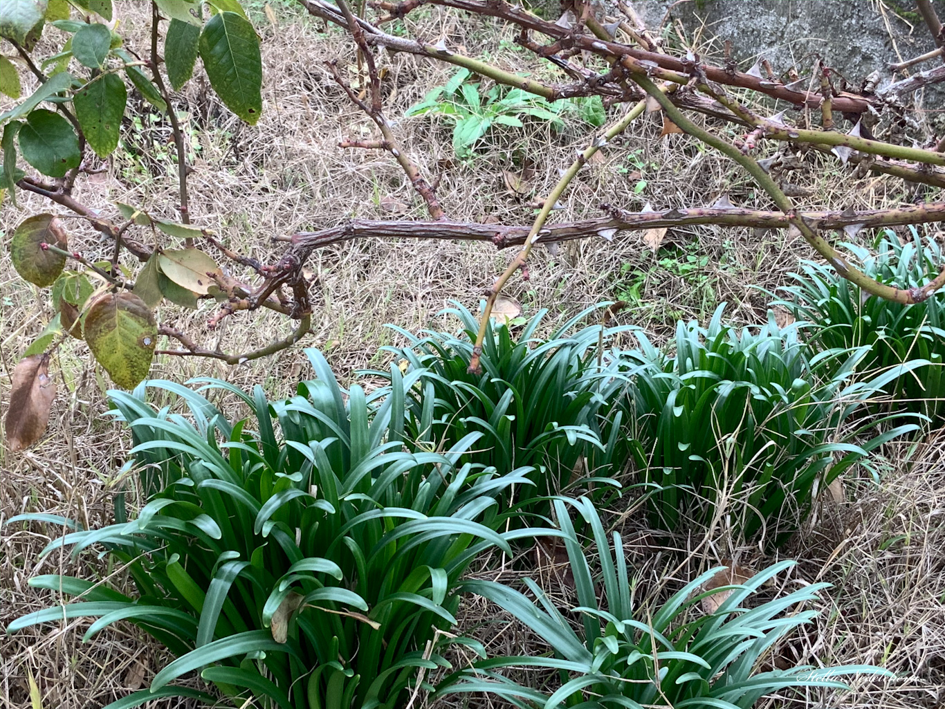 Végétation à l'approche de l'hiver