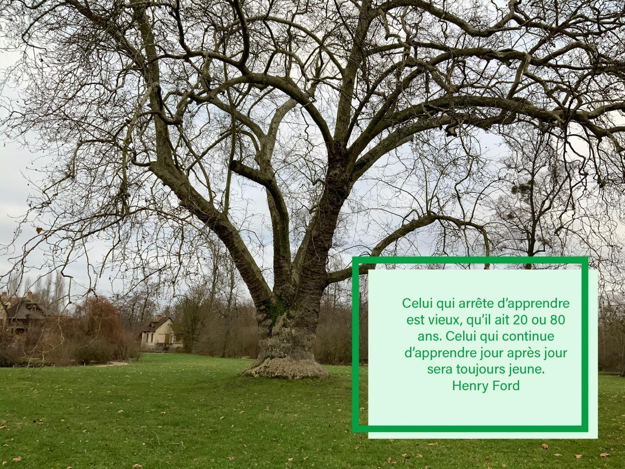 Un arbre centenaire avec une citation sur l'apprentissage