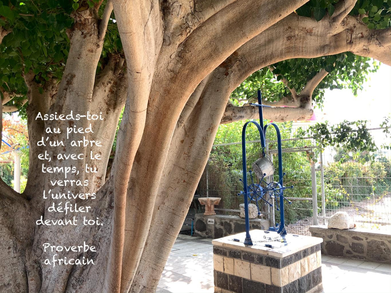 Citation sur l'image d'un arbre immense à côté d'un puit