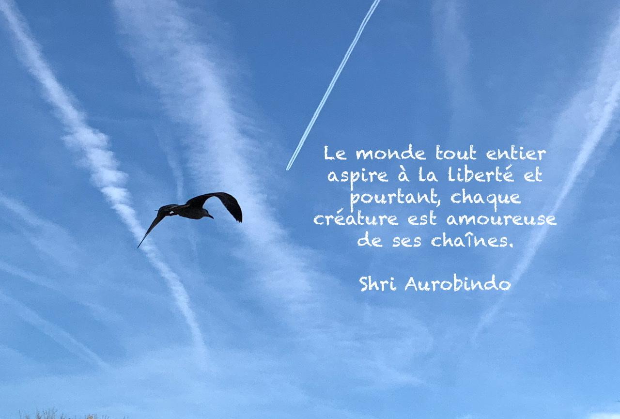 Un oiseau volant dans le ciel bleu et une citation sur la liberté