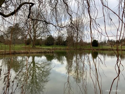 Branches d'arbres au dessus d'un lac et leurs reflets dans l'eau