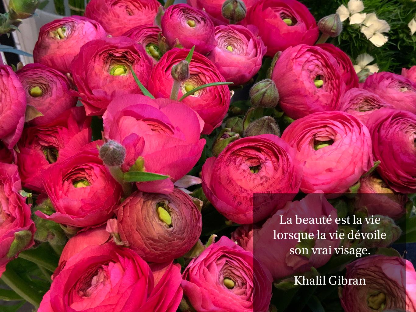 Citation sur la beauté de Khalil Gibran sur un fond de fleurs fuchsia