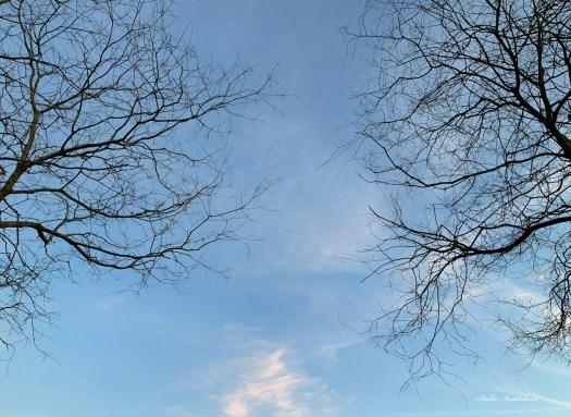 Ciel bleu et petits nuages blancs entre les branches de deux arbres