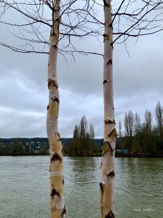 Arbres au bord de la Seine