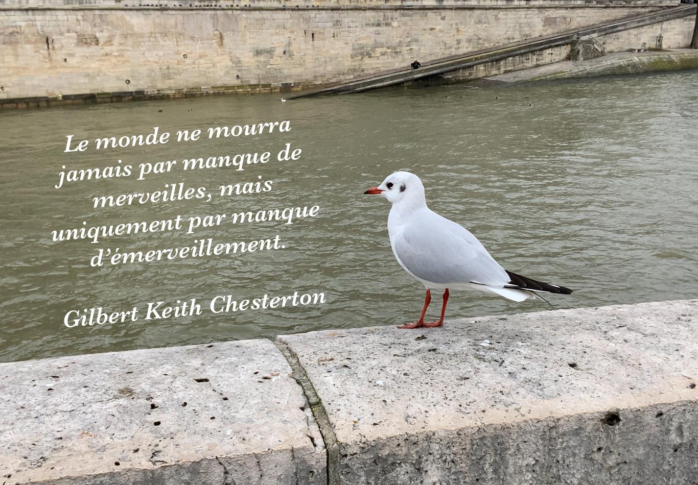Oiseau au bord de la Seine et citation