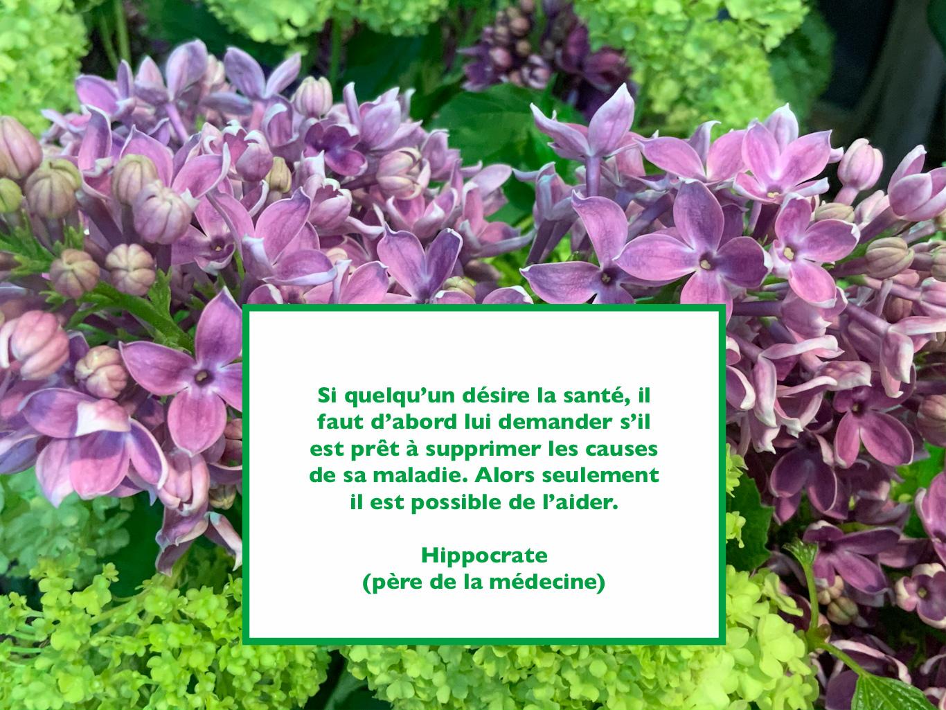 Citation d'Hippocrate sur la santé