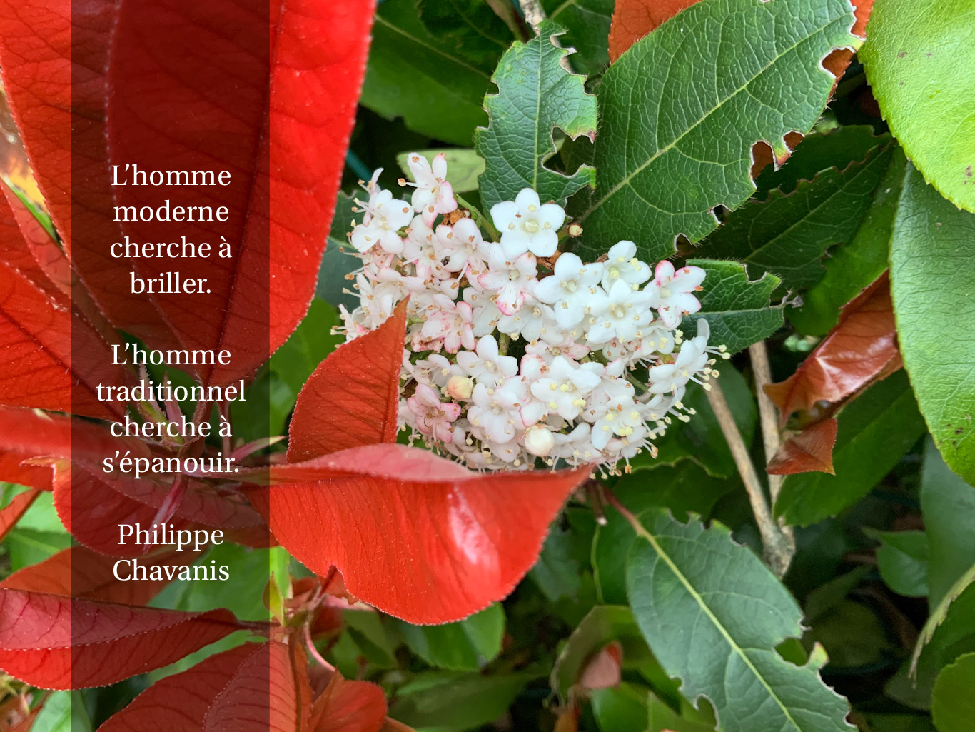 Citation - l'homme traditionnel et l'homme moderne