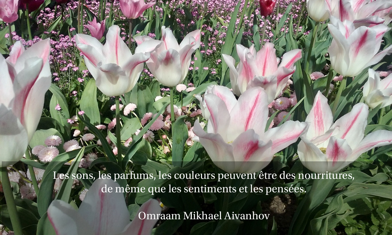 Citation sur un champs de tulipes