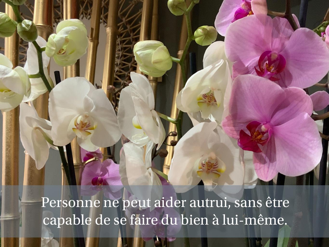 Citation sur un fond d'orchidées