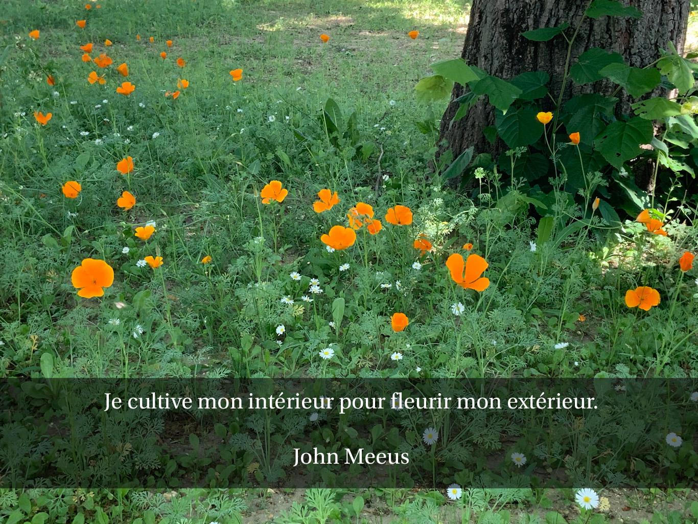 Citation - cultiver la beauté