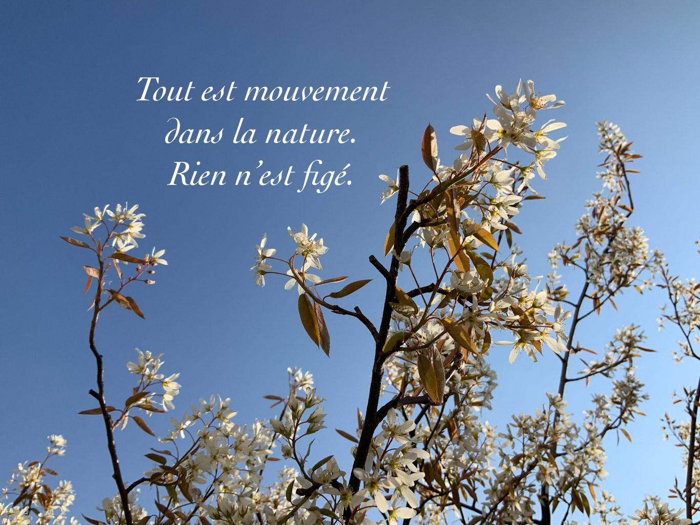Branches d'arbre fleuri sur le fond du ciel bleu