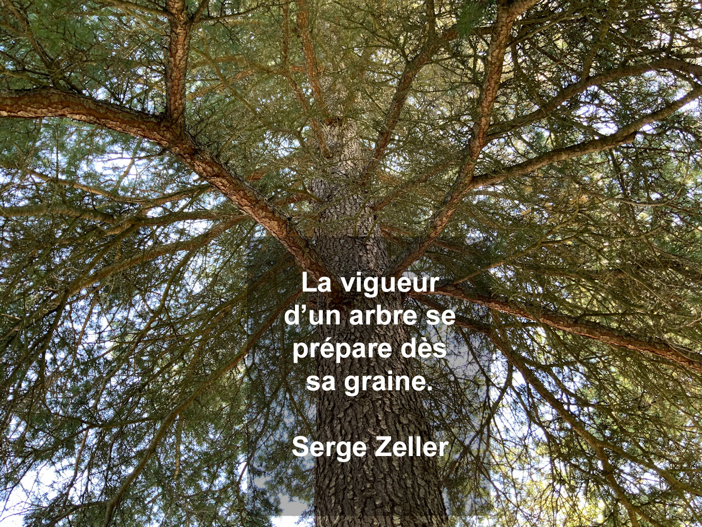 Citation - arbre