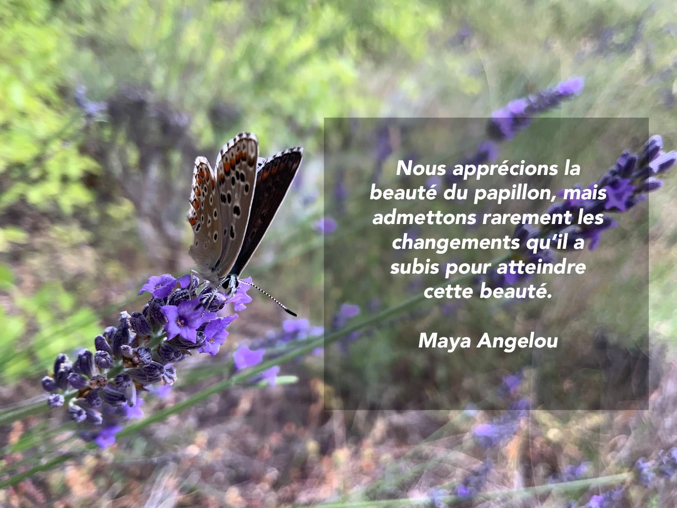 Citation sur la beauté du papillon
