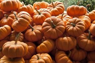 pumpkin ile ilgili görsel sonucu