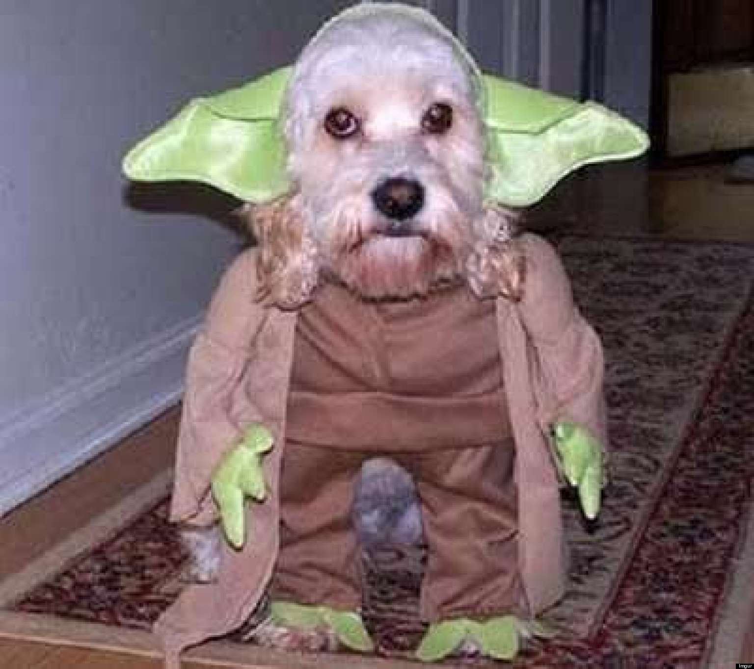 15 Dogs Dressed As Star Wars Characters. Female Wookie Costume & Dog Wookie Costume - The Best Dog 2018