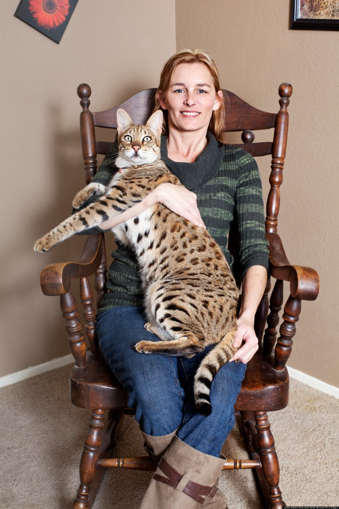 22 best big house cats images on animals and - Biggest Cat In The World Guinness 2017