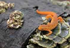 A red eft - An EFT i
