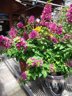 gotta have it bougainvillea gardens to grow and how to on extraordinary low maintenance front yard and backyard landscaping ideas have a lovely garden with less work id=47377