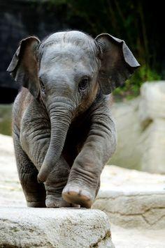Baby Elephant <3