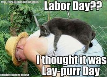 Image result for labor day funny cat