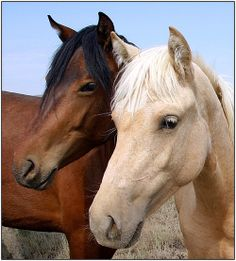 1000 images about Really pretty horses on Pinterest