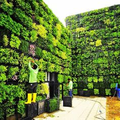 vertical garden institute 1000+ ideas about Agriculture on Pinterest | Food Security