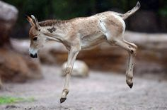 1000 images about Frisky Foals on Pinterest Baby horses