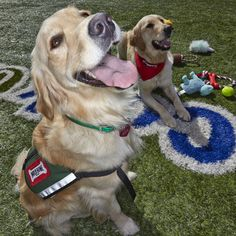 Paws Across Texas Animal Assisted Therapy | The Caring ...