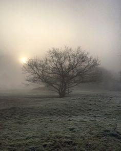 Misty morning | Jour