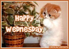 Kitty Is Happy Its Wednesday In Animated Fashion Lol Wednesday DailyGrind WednesdayHumor