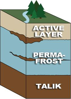 1000 Images About Arctic Tundra On Pinterest Biomes