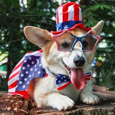 Image result for fourth of july puppies