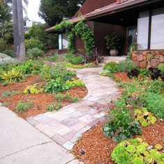 No Water Landscaping Ideas | Southern California Gardening ... on Non Grass Backyard Ideas  id=37722