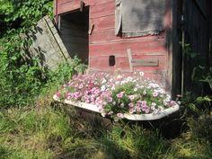 Bathtub Flower Beds On Pinterest Old Bathtub Bathtubs