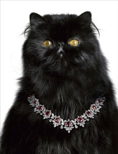 Black Cat Wearing A Beautiful Ruby And Diamond Ensemble