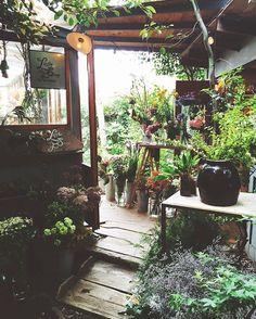 1000 Ideas About Flower Shop Decor On Pinterest