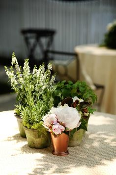 1000 Images About Wedding Herbs Centerpiece On Pinterest