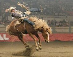 1000 Images About Rodeo On Pinterest 8 Seconds Lane