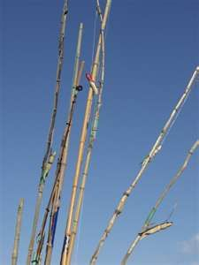 1000 Images About Bamboo Clump Is Growing On Pinterest Fishing Poles Bamboo And Trellis