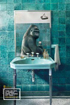 Poster do filme National Geographic Video - O Gorila Urbano