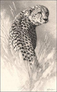 ANIMAL ART Traditional Oil By Bill Melvin Via Behance