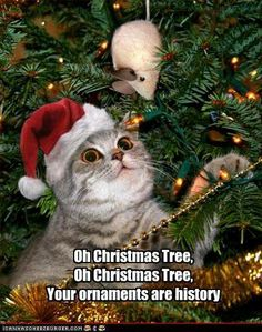 1000 Images About Christmas Cats Amp Dogs On