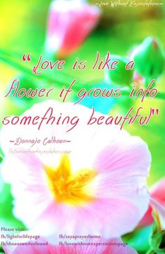 Flower Quotes On Pinterest Flower Quotes Field Of