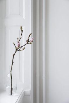 Magnolia branches, S